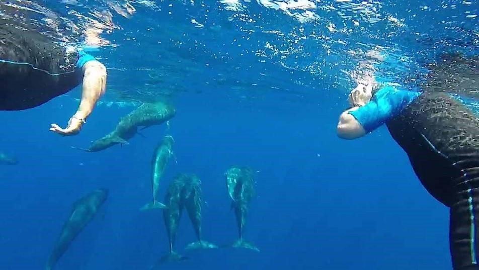 Nager avec les dauphins au fil de virées en mer inoubliables en Côte d'Azur !